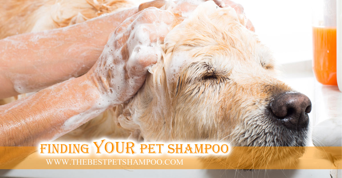 Dog Shampoo Article On How To Wash a Dog