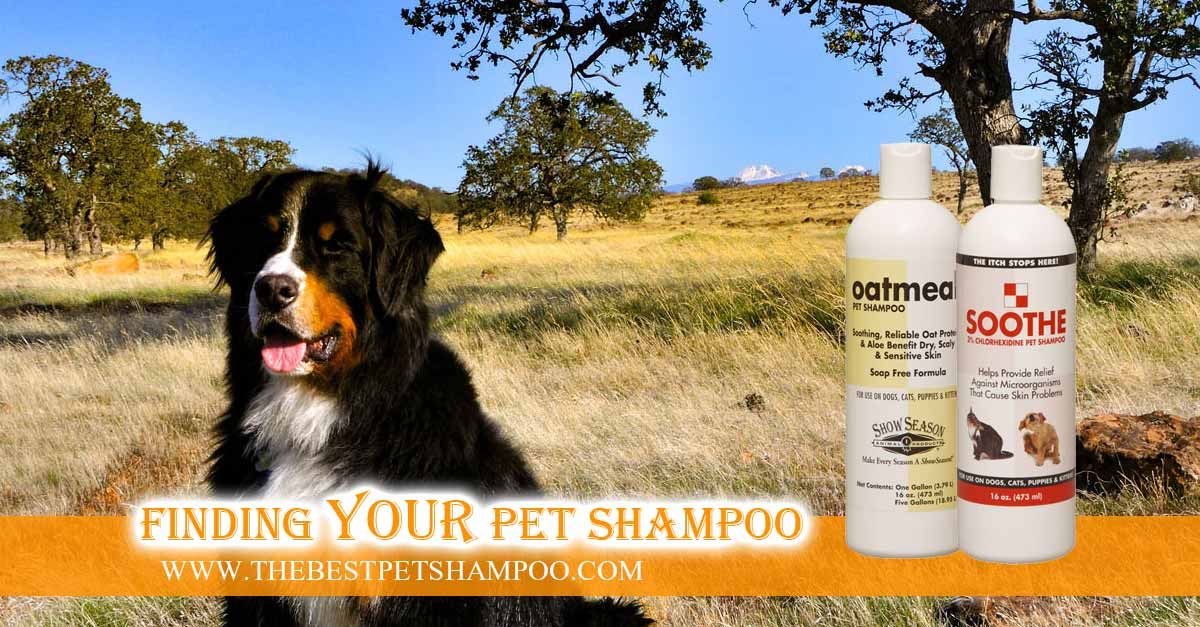 How To Find The Best Dog Shampoo For Allergies and Itchy Skin
