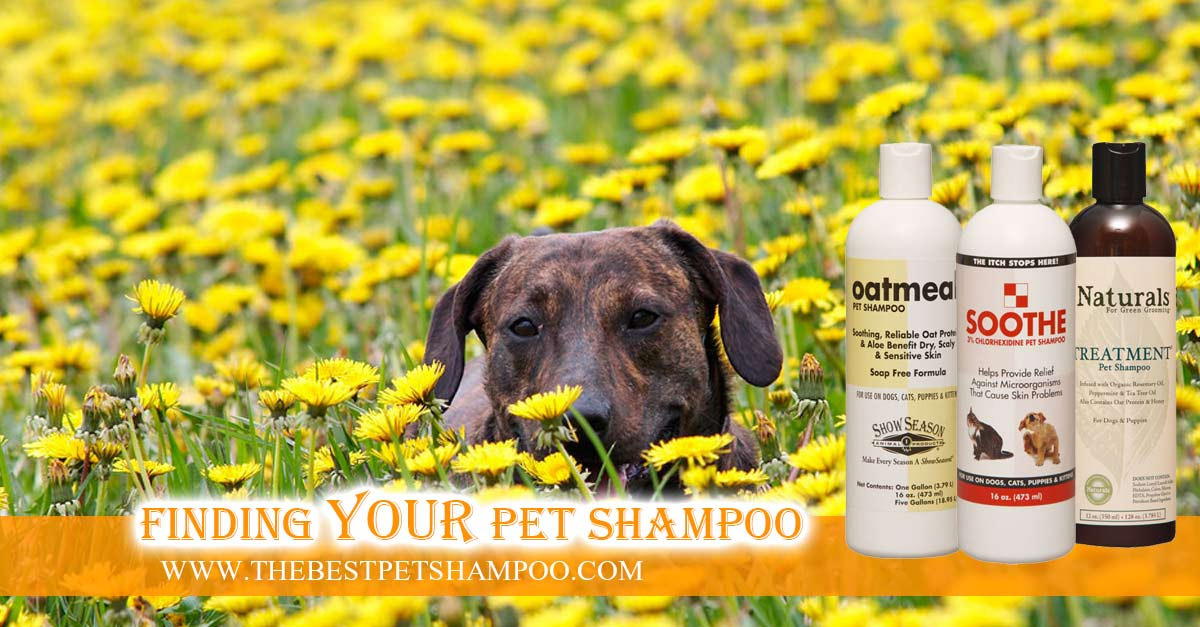 Dog Shampoo For Itchy Dogs