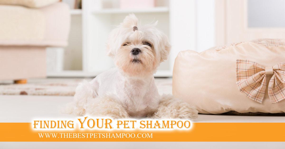 Best Dog Shampoo For Mats